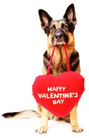 dog-with-valentines-day-heart_urmpjp